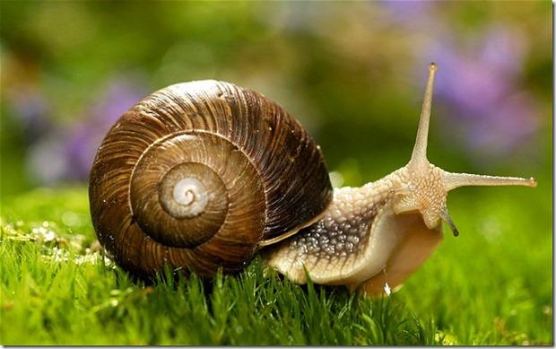 snailploip