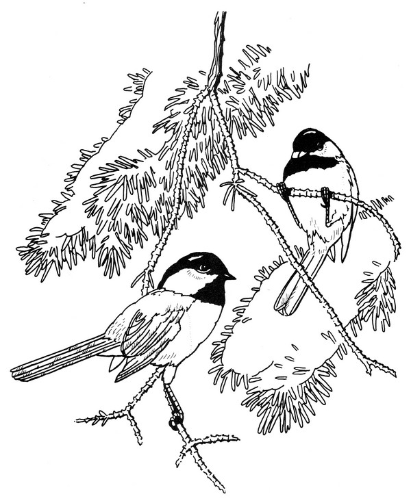 Black capped Chickadee Coloring Page | CreativeTherapyTools