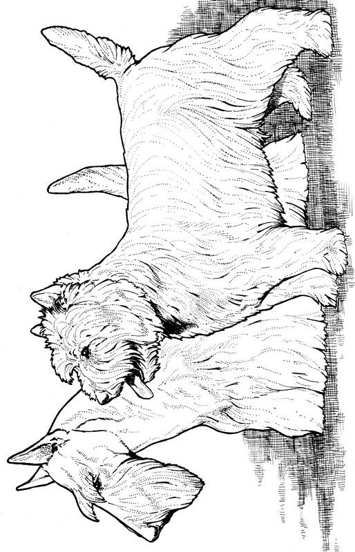 CPDG-Scotish Terrier & West Highland Terrier-TR.jpg