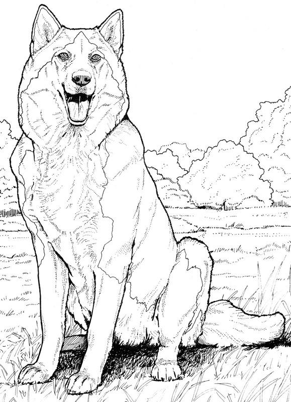 CPDG-Siberian Husky-TR.jpg
