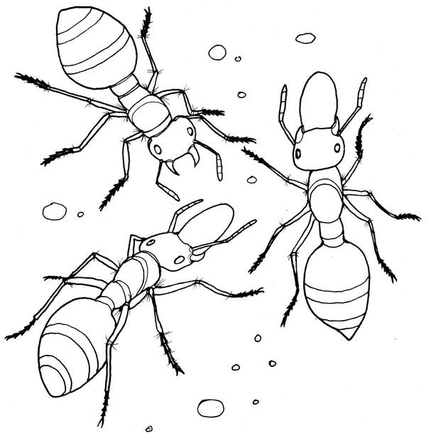 CPIT-Ant-TR.jpg