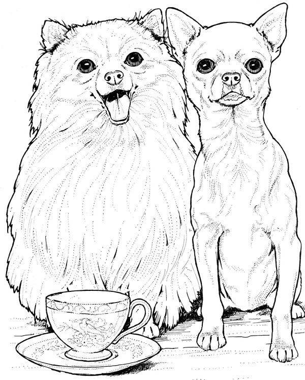 CPDG-Pomeranian & Chiuahua-TR.jpg