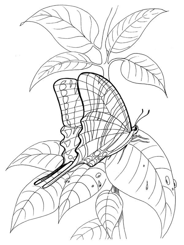 CPBF-Zebra Swallowtail-TR.jpg