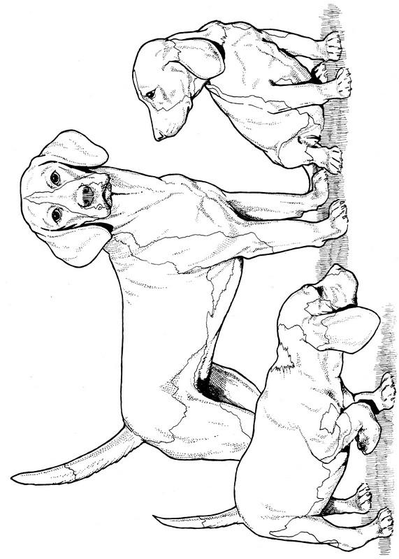 CPDG-Beagle-TR.jpg