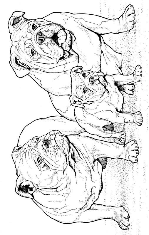 CPDG-Bulldog-TR.jpg