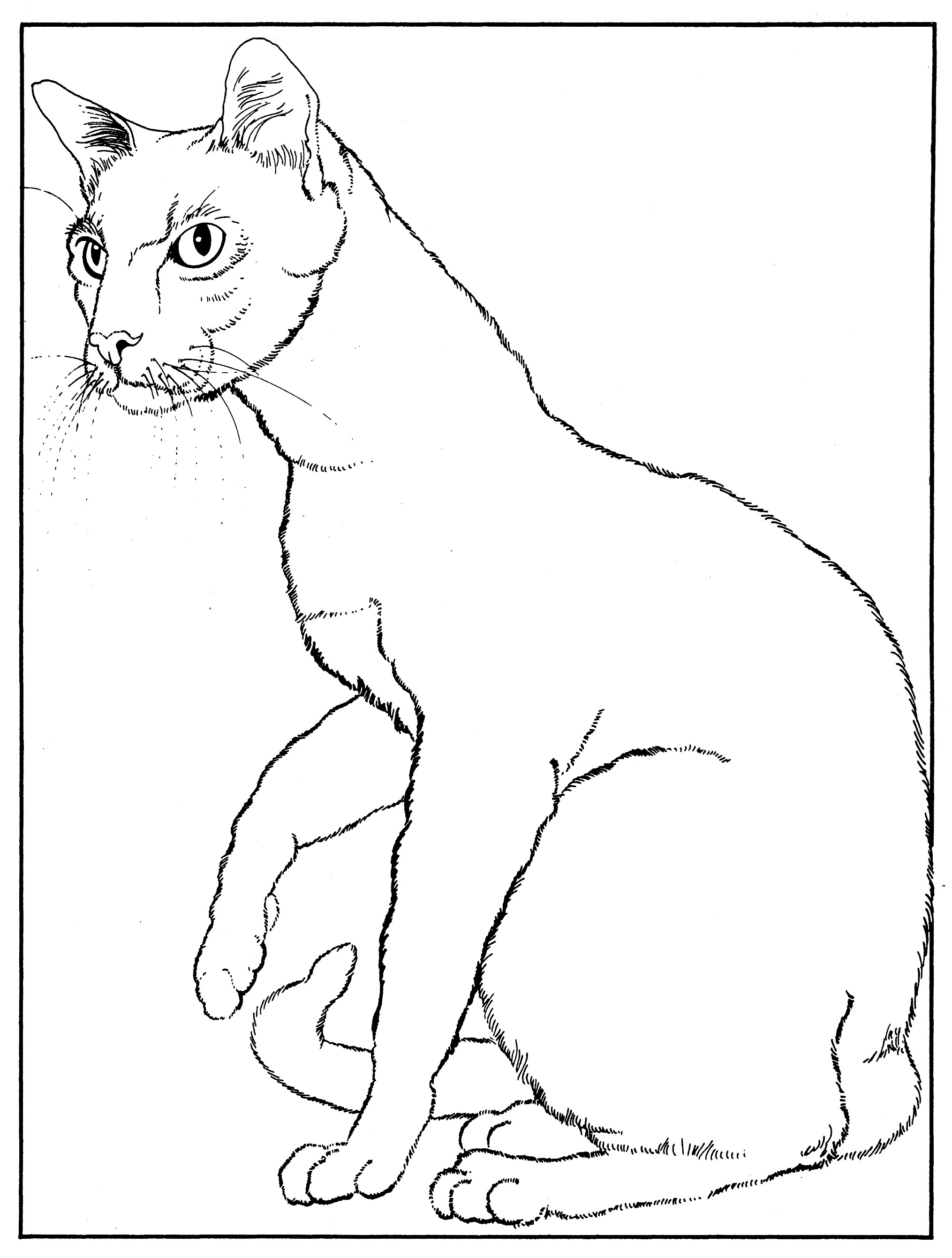 Siamese-Coloring Page